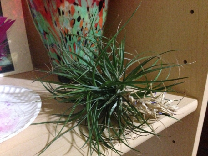 I've decided I want more of these air plants all over the house.  For now we have just the one in the dining room.