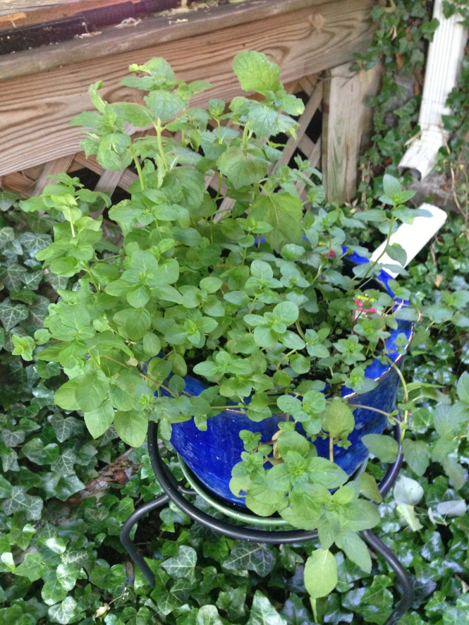 Planter in the front yard.  Chocolate mint, grapefruit mint and orange mint.  It smells really good.