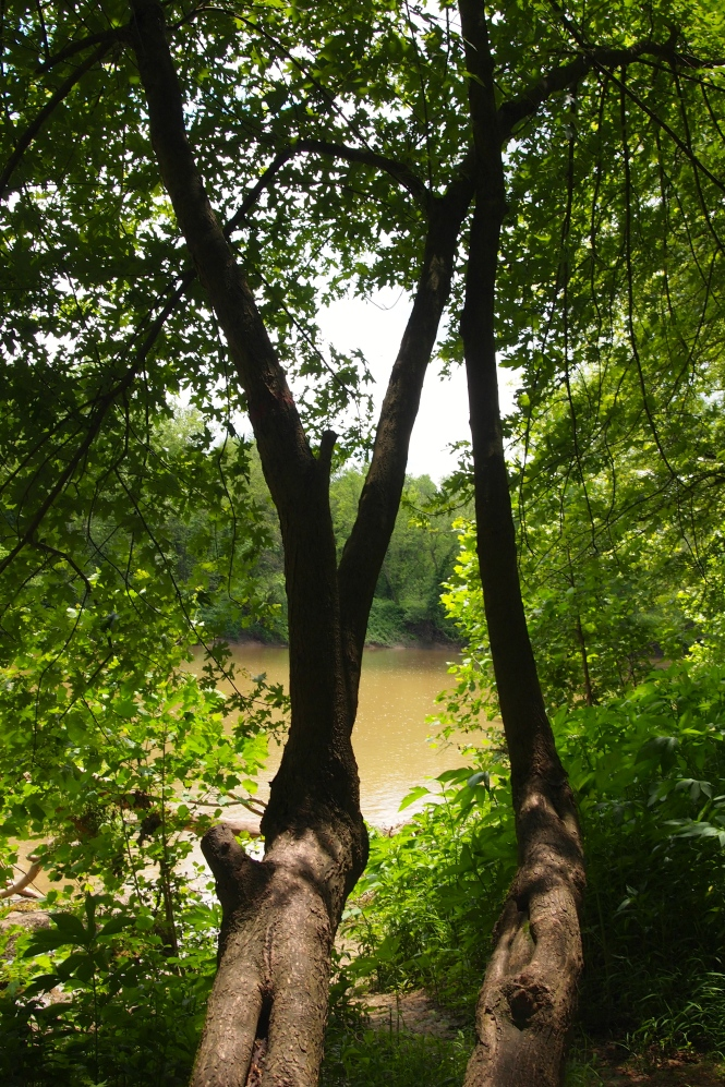 Glimpse of the river through the trees