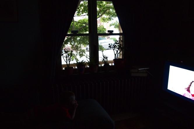 Plants stolen from outside window sill - solution - inside window sill plants now!  Lets see how this works.