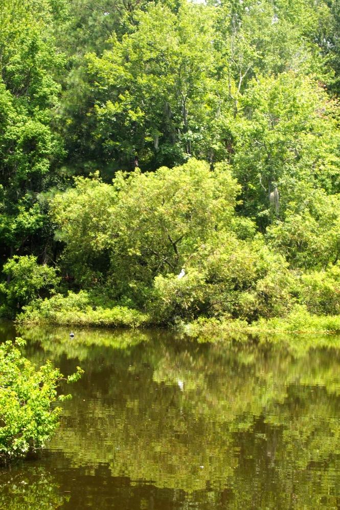 Ledbetter Pond