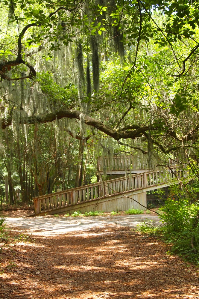 I love all the spanish moss on the trees.
