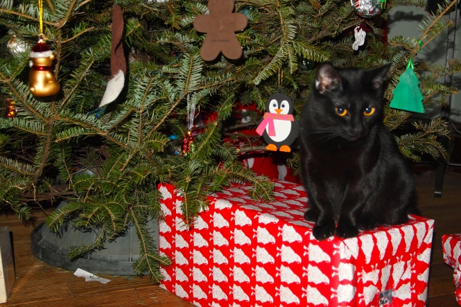 Georgie watched over the presents back at our house Christmas morning.